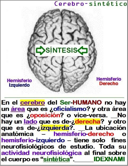 El cerebro del Ser-HUMANO es sintético - IDEXNAMI