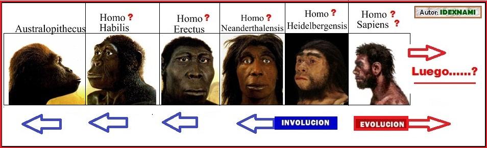 evolucion-del-hominido-a-donde-idexnami.jpg