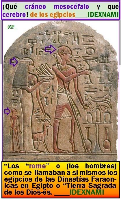 Dinastía-familia de los Dios-es y sus cerebros - mesocéfalos en Egipto-IDEXNAMI