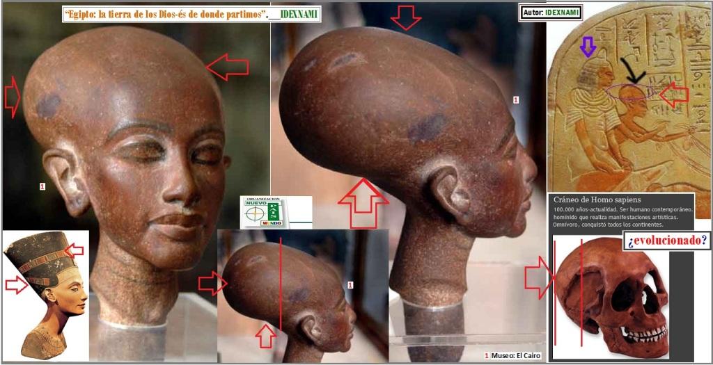 Imagen-de-la-cabeza-craneo-de-los-hijos-de-los-DIOS-Dios-es-egipcios-autor-idexnami